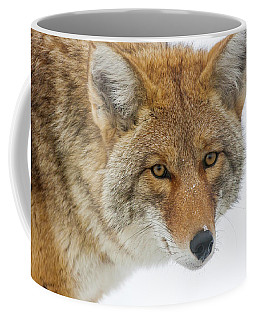 Mr. Coyote Coffee Mug