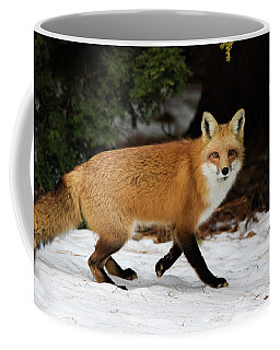 Coffee Mug featuring the photograph Mr Fox by Mircea Costina Photography