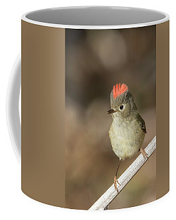 Coffee Mug featuring the photograph Mr Kinglet  by Mircea Costina Photography