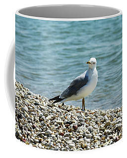 Coffee Mug featuring the photograph Mr. Personality by Sally Sperry