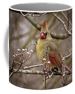 Coffee Mug featuring the photograph Mrs Cardinal by Douglas Stucky