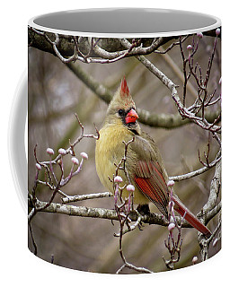 Coffee Mug featuring the photograph Mrs Cardinal II by Douglas Stucky