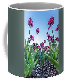 Msu Spring 20 Coffee Mug by John McGraw