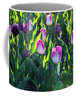 Msu Spring 3 Coffee Mug