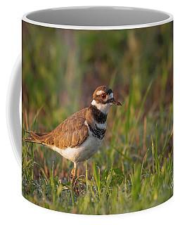 Muddy Killdeer Coffee Mug