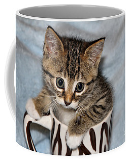 Mug Kitten Coffee Mug by Teresa Zieba
