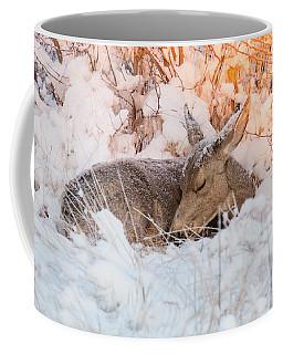 Mule Deer Doe Curls Up In The Snow Coffee Mug
