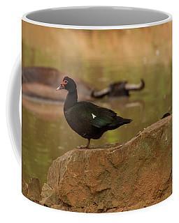 Muscovy Duck Coffee Mug