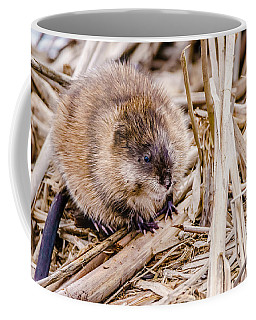 Coffee Mug featuring the photograph Muskrat Ball by Steven Santamour