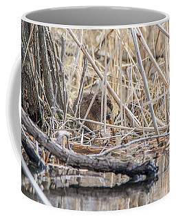 Coffee Mug featuring the photograph Muskrat Eating A Fish by Steven Santamour