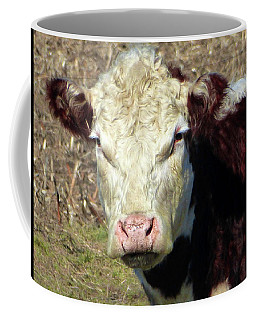 My Favorite Cow Coffee Mug