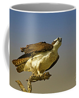 Coffee Mug featuring the photograph My Pose For You by Deborah Benoit