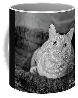 Coffee Mug featuring the photograph My True Love Revisited by Luther Fine Art