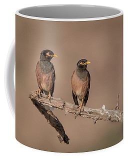 Myna Pair Coffee Mug