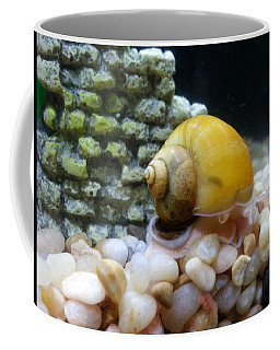 Coffee Mug featuring the photograph Mystery Snail by Robert Knight