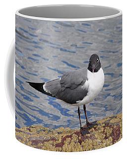 Bird Coffee Mug by Glenn Gordon