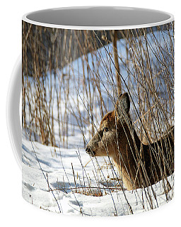 Napping Fawn Coffee Mug by Brook Burling
