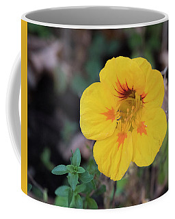 Nasturtium And Thyme Coffee Mug