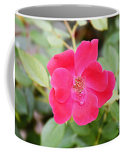 Coffee Mug featuring the photograph Nature - Colorful Flower Gifts  by Ray Shrewsberry