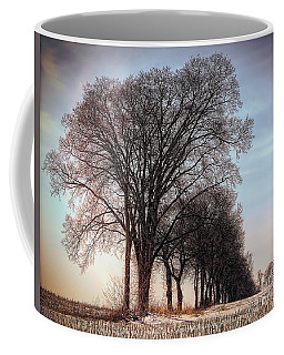 Nature Naked Trees Winter Sun  Coffee Mug