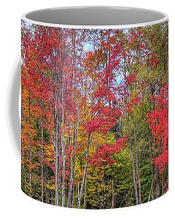 Coffee Mug featuring the photograph Natures Autumn Palette by David Patterson