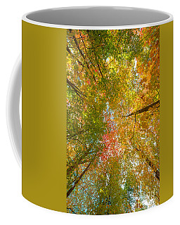 Natures Canopy Of Color  Coffee Mug
