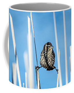 Coffee Mug featuring the photograph Nature's Circus by Steven Santamour