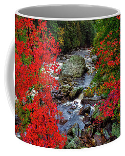 Natures Frame Coffee Mug