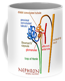 Coffee Mug featuring the digital art Nephron Labels #1 by Russell Kightley