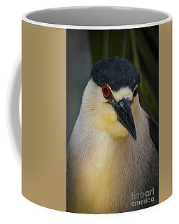 Night Heron Portrait Coffee Mug by Mitch Shindelbower