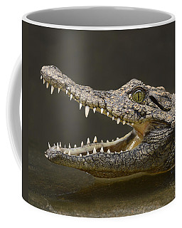 Nile Crocodile Coffee Mug