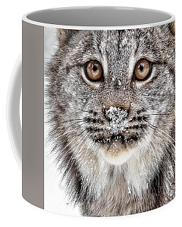 No Mouse This Time Coffee Mug