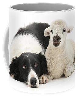 No Sheep Jokes, Please Coffee Mug