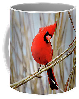 Northern Cardinal In Reeds Coffee Mug