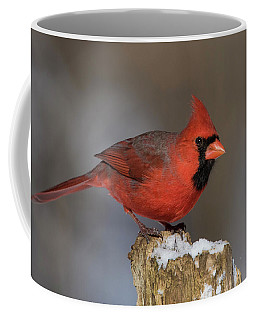 Coffee Mug featuring the photograph Northern Cardinal In Winter by Mircea Costina Photography