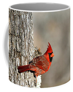 Northern Cardinal On Tree Coffee Mug