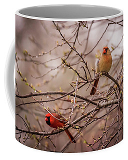Coffee Mug featuring the photograph Northern Cardinal Pair In Spring by Terry DeLuco