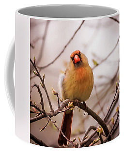 Northern Female Cardinal Pose Coffee Mug by Terry DeLuco