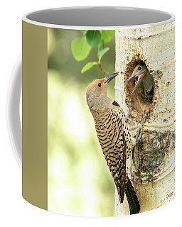 Northern Flicker Feeding Baby Coffee Mug