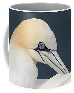Northern Gannet At Troup Head - Scotland Coffee Mug