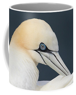 Northern Gannet At Troup Head - Scotland Coffee Mug