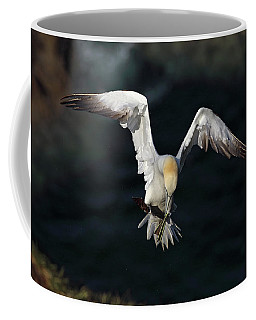 Coffee Mug featuring the photograph Northern Gannet In Flight 2 by Grant Glendinning