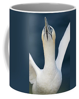Northern Gannet Stretching Its Wings Coffee Mug