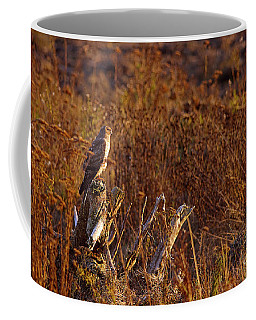 Coffee Mug featuring the photograph Northern Harrier At Sunset by Sharon Talson