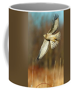 Northern Harrier Banking Coffee Mug