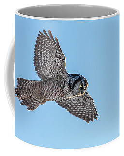 Coffee Mug featuring the photograph Northern Hawk Owl Hunting by Mircea Costina Photography