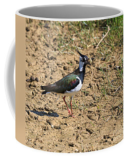 Northern Lapwing Coffee Mug