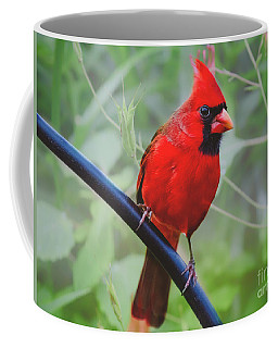 Northern Male Red Cardinal Bird Coffee Mug
