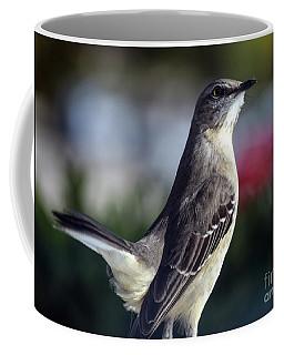 Northern Mockingbird Up Close Coffee Mug