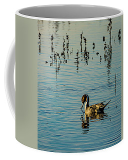 Northern Pintail At The Wetlands Coffee Mug